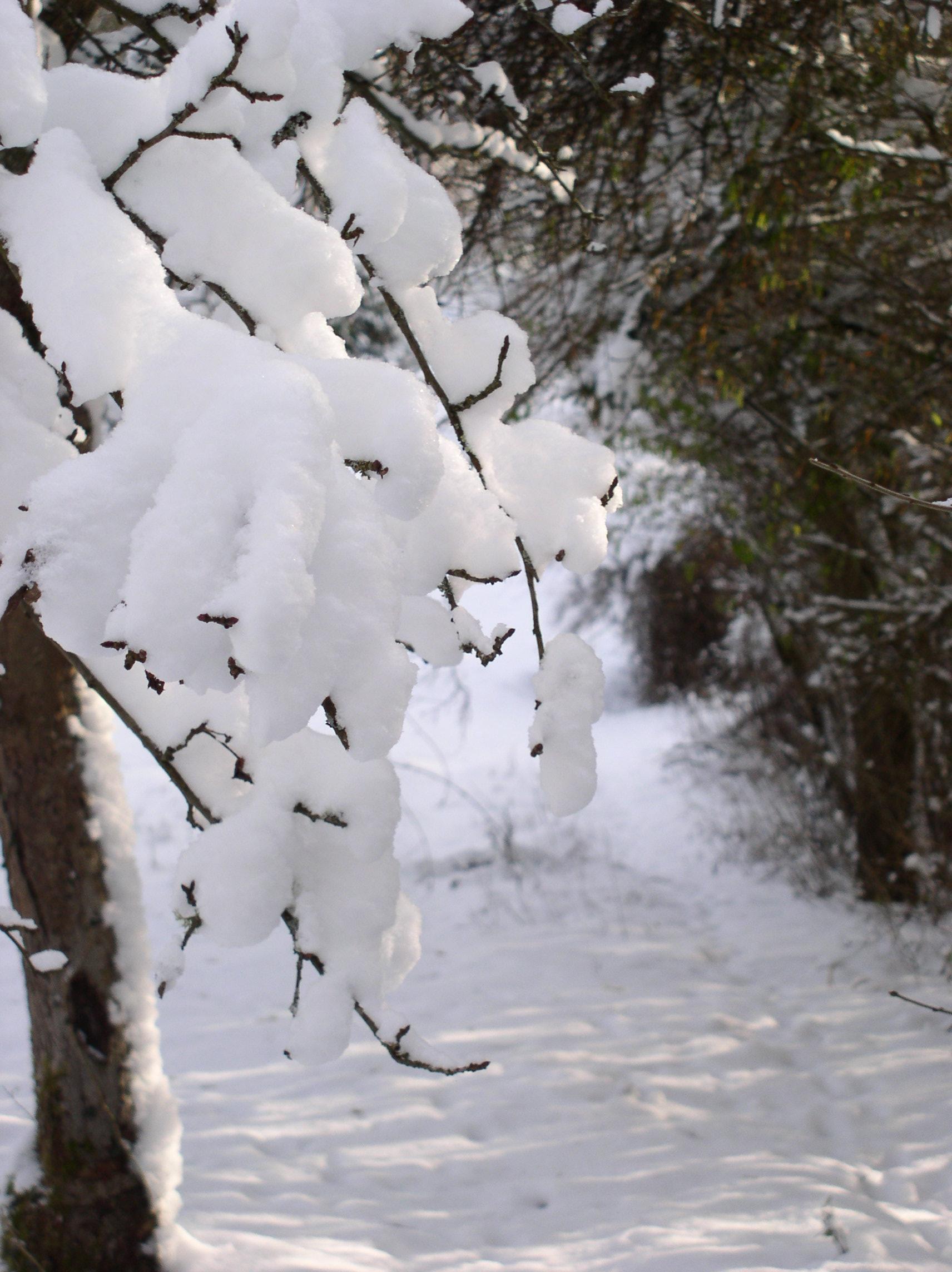 Viel Schnee...
